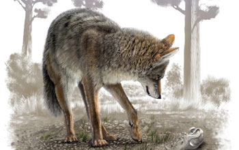 Illustration showing a young modern coyote looking at a fossil coyote skull in California tar pit.