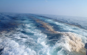 A wake of oil is left behind an oceanographic research vessel ferrying scientists into the Gulf.