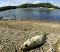 Image of a dead fish lying on a receded lake shore.