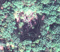 Photo of a gap in the forest canopy with contours superimposed on the image.