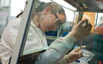 Photo of graduate student Mary-Catherine Leewis preparing a soil sample for testing.