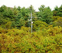 Photo of Harvard Forest's environmental measurements tower surrounded by oaks and white pines.