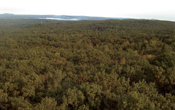 Photo of trees from Harvard Forest's highest point.