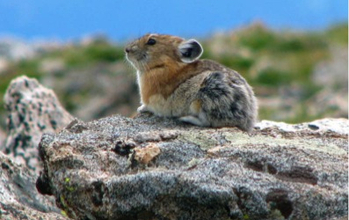 rodent sitting on rock