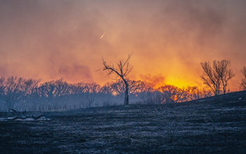the sun sets over a prescribed burn at the Konza Prairie Biological Station