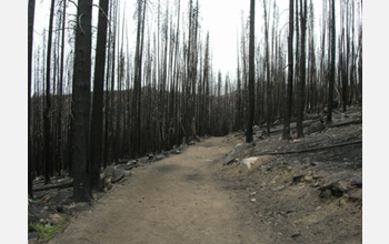 Photo showing area one year after the 2006 Tripod Complex fires in northern Washington.