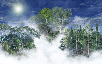 Photo of fog-covered forest canopy.