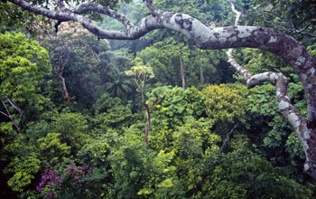 Tropical rainforest on Barro Colorado Island, Panama.