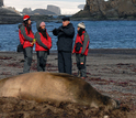 Students and a teacher pn the shore enxt to an elephant seal