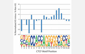 Representation of allele-specific and non-allele-specific SNPs across the CTCF binding motif (17).