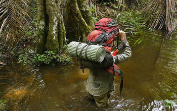 Man walking through the swamps of Minkebe National Park in Gabon, Central Africa.