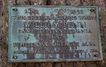 Photo of a sign on on a white oak,  saying the tree was standing in 1682.