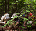 Photo of threeHarvard Forest ecologists examining wood in the hurricane re-creation experiment.