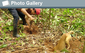 Photo of a hunter enlarging a burrow and his dog at other burrow end and the words Photo Gallery.