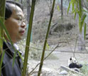 researcher watchin a panda in wolong