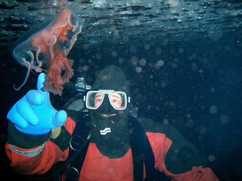 A research dive reaches out to a jelly fish in McMurdo Sound.
