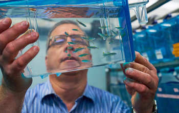 Joseph Fetcho, of Cornell University, with fish in a lab.