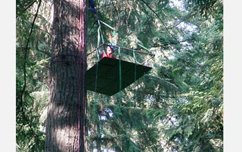 Photo of a participant in Legislators Aloft reaching a treetop platform.