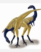 This image shows a reconstruction of Limusaurus with no evidence of feather structures.