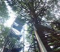 Image showing the Hemlock Tower in the Harvard Forest LTER site.