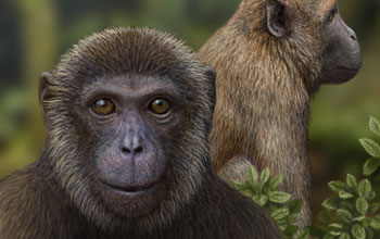 an artist's reconstruction of Rukwapithecus (front, center) and Nsungwepithecus (right).