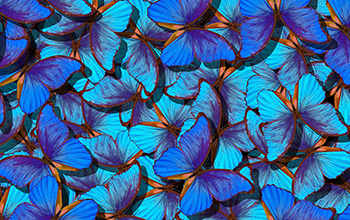 new technology displays color that uses nanoscale structures inspired by butterflies