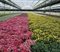 Photo of a geothermally heated greenhouse.