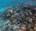 Image of a coral reef that rings the island of Mo'orea.