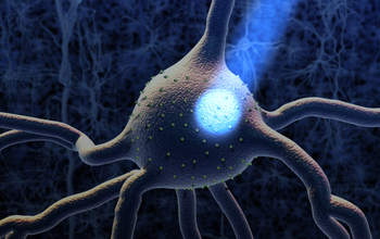 A neuron activated by light