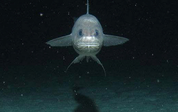 Fish living in the deep ocean