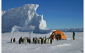 Photo of emperor penguins approaching field camp at Cape Washington, Antarctica
