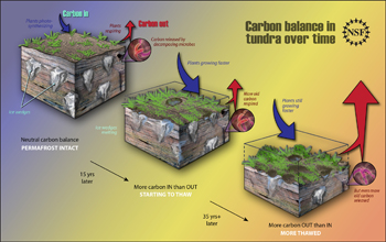 As areas with permafrost thaw and more old carbon is released, the carbon balance changes.