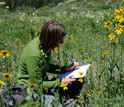 Photo of a research technician recording plant flowering in a high-elevation Colorado meadow.