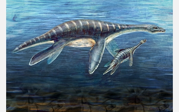 Illustration of a mother and juvenile plesiosaur