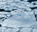 Photo of rounded pieces of Arctic ice.