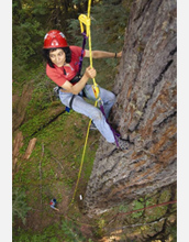 Photo of Nalini Nadkarni scaling an old-growth Douglas-fir tree in the Cascade Mountains.