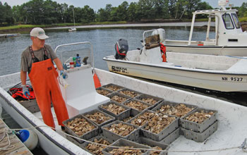 Man with oyster shells in a boat on water