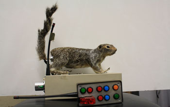 Robbosquirrel, the robotic squirrel.