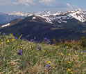 Photo of wildflowers at 12,100 feet on Copper Mountain.