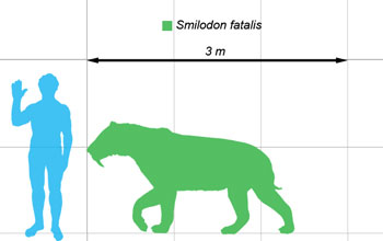 Image showing the outline of a saber-toothed cat, shown in comparison with that of a human.
