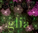 Cover of the November 5, 2010 issue of the journal Science.