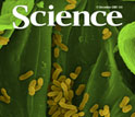 Cover of December 11, 2009 journal Science.