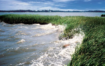 Photo of water breaking on a wetland along the coastline.