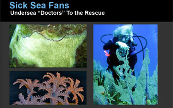 collage of various pictures showing researchers, seafans and corals