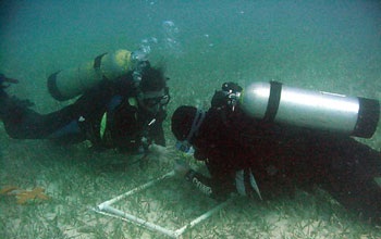 Photo of scientists taking samples of seagrass beds at the Florida Coastal Everglades LTER site.