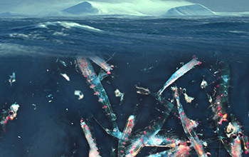 Image showing zooplankton in the ocean.