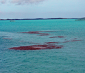 Photo showing mats of seaweed floating on the sea with islands in the Bahamas in the background.