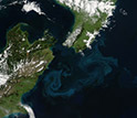 Aerial image of blooms of phytoplankton forming sea-swirls near New Zealand coast.