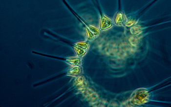 Image of phytoplankton in a dark sea.