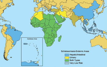 Map of the world showing countries at risk for the snail-borne disease schistosomiasis.